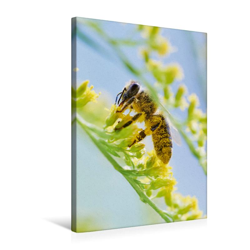 ein motiv aus dem kalender die biene und die farbe gelb. Black Bedroom Furniture Sets. Home Design Ideas
