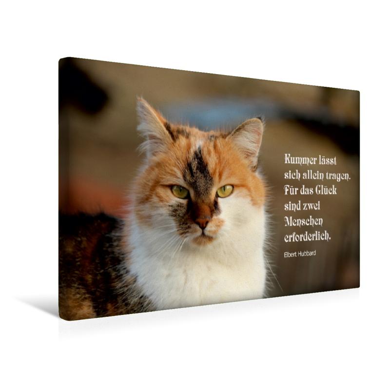 Ein Motiv Aus Dem Kalender Glückskatze Mit Zitaten Zum