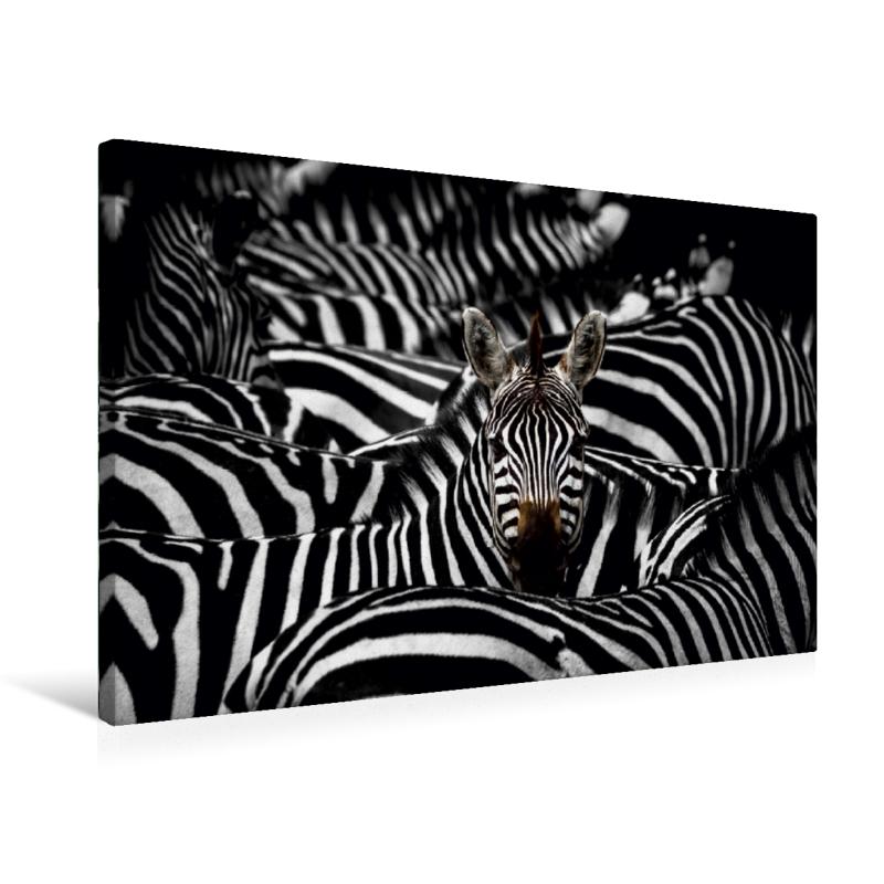 Leinwand Zebra Serengeti-Nationalpark