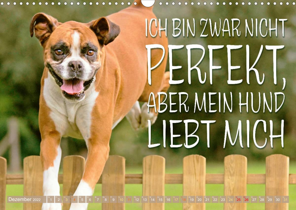 Ein Mann kann kein vollwertiger Ersatz für einen Hund sein